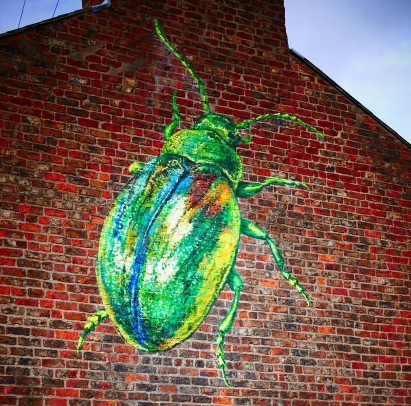 A Tansy Beetle painted on a York house by ATM