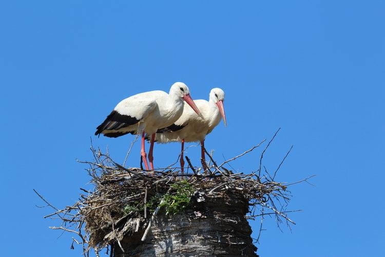 Storks ©Tim Birkhead